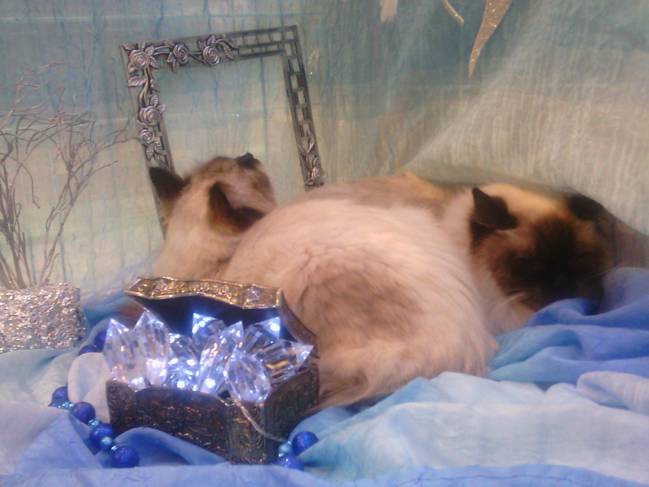 Koty kotki kociaki