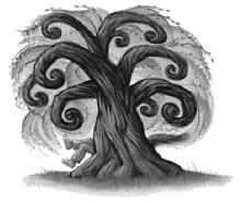 wierzba bijąca - symetria
