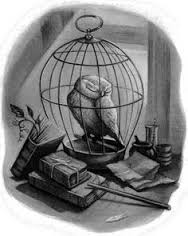 Hedwiga Harry Potter