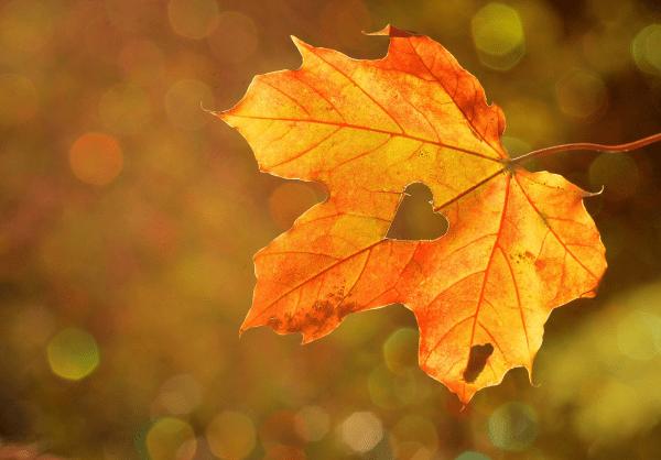 Jesienna lista to do - co można robić we wrześniu?