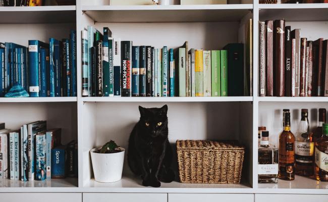5 powieści z wątkami autobiograficznymi